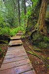 Stock photo of a wet boardwalk leading up into the wonderfully green dense rain forest to Hot Springs Cove.