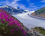 Stock photo of Salmon Glacier fringed by fireweed near the town of Stewart, British Columbia, Canada, North America.