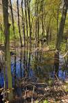 Stock photo of the swamp and forest along the Woodland Trail in Point Pelee National Park, Leamington, Ontario, Canada.