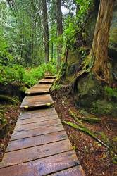 Nature boardwalk in rain forest Hot Springs Cove Openit Peninsula Tofino