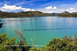 Mussel Farm in Kenepuru Sound Waitaria in Waitaria Bay Marlborough South Island New Zealand