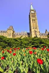 Peace Tower Tulip Garden Blue Sky Parliament Hill City of Ottawa