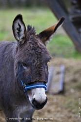 Animal Donkey Portrait