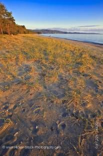 Stock photo of Agawa Bay at sunset with bright blue sky above in this photo of a sandy section of the beach on Lake Superior in Lake Superior Provincial Park, Ontario, Canada.