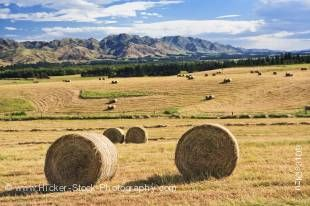 Stock photo of bales of hay in a paddock along State Highway 70, Pacific Alpine Scenic Route, South Island, New Zealand.