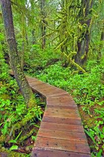Stock photo of a boardwalk leading through the lush rain forest to Hot Springs Cove, Openit Peninsula, Maquinna Marine Provincial Park, Clayoquot Sound, Clayoquot Sound UNESCO Biosphere Reserve, West Coast, Vancouver Island, British Columbia, Canada.