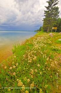 Stock photo of Clear Lake, with dandelions and trees along the shoreline in Riding Mountain National Park in Manitoba Canada