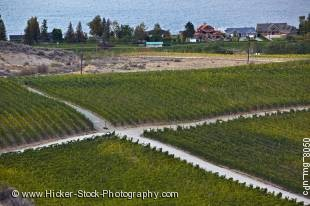 Stock photo of crossroad amongst vineyards near the city of Osoyoos, Okanagan-Similkameen Region, Okanagan, British Columbia, Canada.