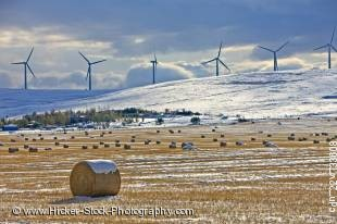 Stock photo of hay bales covered in snow in Cowley back dropped by windmills in Southern Alberta, Canada.