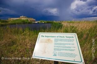 Stock photo of sign explaining the importance of duck tunnels at the Oak Hammock Marsh Interpretive Centre, near Stonewall, Manitoba, Canada.