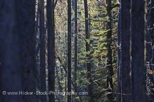 Stock photo of sunlight highlighting the trees in the forest along the trail to the Upper Falls of Johnston Canyon, Banff National Park, Canadian Rocky Mountains, Alberta, Canada.