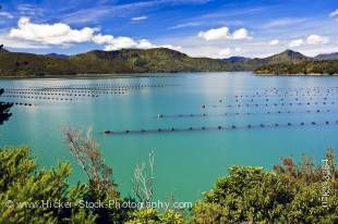 Stock photo of Mussel Farm in Kenepuru Sound near Waitaria in Waitaria Bay, Marlborough, South Island, New Zealand.