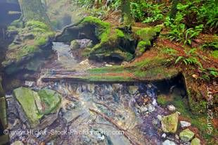 Stock photo of moss covered rocks and tree roots beside the stream which supplies the natural hot mineral water to the rocky pools at Hot Springs Cove, Openit Peninsula, Maquinna Marine Provincial Park, Clayoquot Sound, Clayoquot Sound UNESCO Biosphere Re