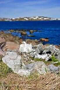 Stock photo of whale bones strewn on the beach along the Boney Shore Trail, across the harbour from the town of Red Bay, Highway 510, Labrador Coastal Drive, Viking Trail, Trails to the Vikings, Strait of Belle Isle, Southern Labrador, Labrador, Canada.