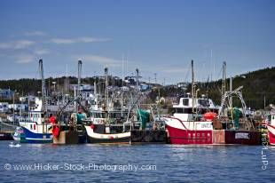 Stock photo of shrimp fishing boats tied up to the dock in the St Anthony Harbour, St Anthony, Viking Trail, Northern Peninsula, Newfoundland, Canada.