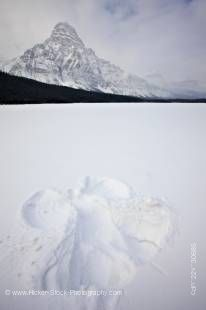 Stock photo of a snow angel made in fresh deep snow on top of Waterfowl Lake with Mount Chephren towering above in Banff National Park in the Canadian Rocky Mountains, Alberta, Canada.