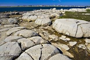 Stock photo of Thrombolites (the earliest forms of primitive life on earth) in Flower's Cove along Highway 430 on the Northern Peninsula, Great Northern Peninsula, Viking Trail, Trails to the Vikings, Newfoundland Labrador, Newfoundland, Canada.