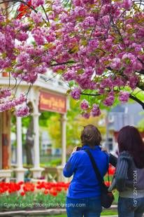 Stock photo of two tourists admiring the bright red tulips and the historic Prince of Wales Hotel (built in 1864) in spring, Niagara-on-the-Lake, Ontario, Canada.
