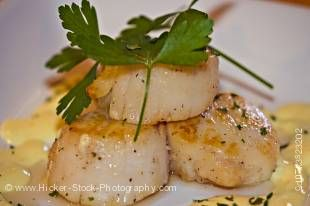 Stock photo of Seared Scallops with Hollandaise sauce, Tuckamore Lodge, Main Brook, Viking Trail, Trails to the Vikings, Great Northern Peninsula, Northern Peninsula, Newfoundland, Newfoundland Labrador, Canada.