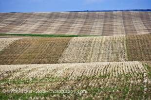 Stock photo of the trimmed and two toned brown wheat fields along Highway 5 between Cardston and Spring Coulee, Southern Alberta, Alberta, Canada.