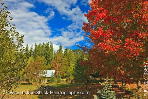 Stock photo of Fall autumn colors trees Crawford Bay Central Kootenay British Columbia Canada