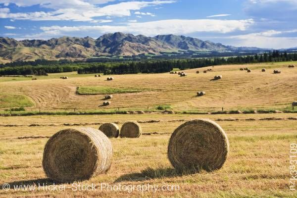 Stock photo of Bales of Hay in paddock State Highway 70 Pacific Alpine Scenic Route South Island New Zealand