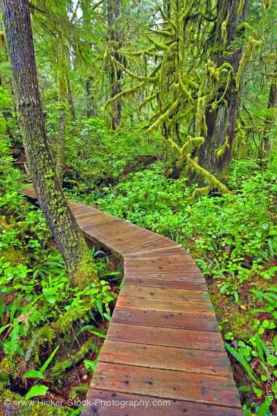 Stock photo of Boardwalk in rainforest Hot Springs Cove Openit Peninsula Maquinna Marine Provincial Park