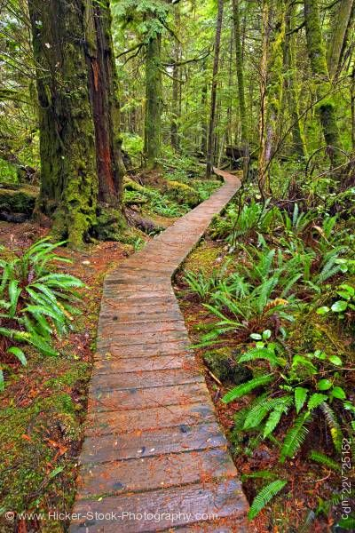 Stock photo of Boardwalk Rainforest Trail Pacific Rim National Park Vancouver Island British Columbia Canada