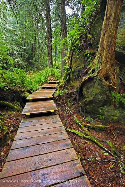 Stock photo of Nature boardwalk in rain forest Hot Springs Cove Openit Peninsula Tofino