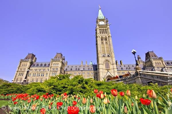 Stock photo of Tulips Centre Block Peace Tower Parliament Hill Ottawa