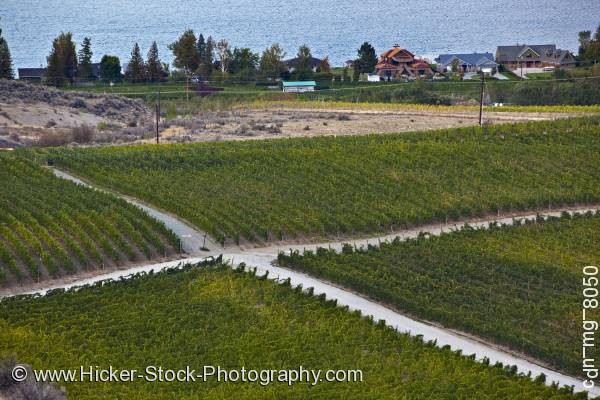 Stock photo of Crossroad vineyards Osoyoos Okanagan British Columbia