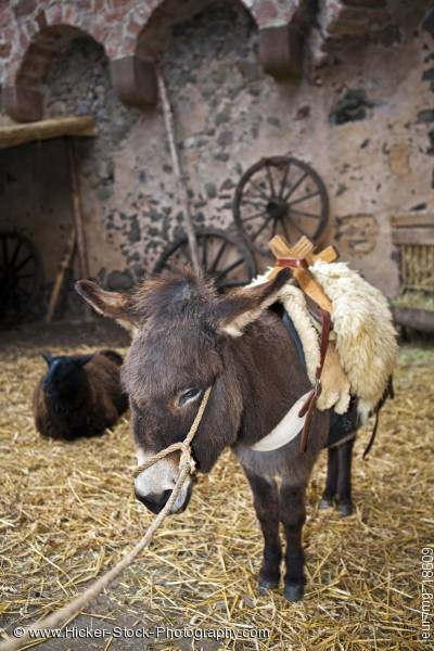Stock photo of Donkey medieval markets Burg Ronneburg Germany