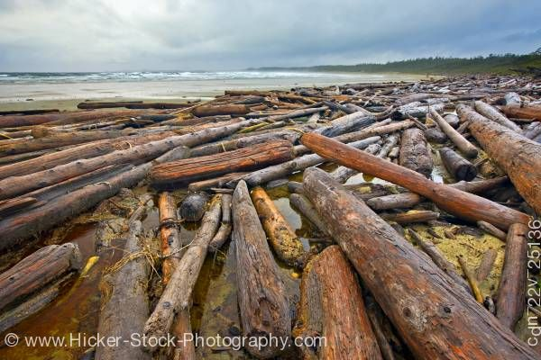 Stock photo of Driftwood Wickaninnish Beach Wickaninnish Bay Pacific Rim National Park British Columbia Canada
