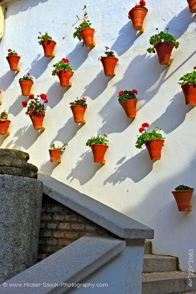 Stock photo of Flower pots wall La Juderia district City of Cordoba Province of Cordoba Andalusia Spain