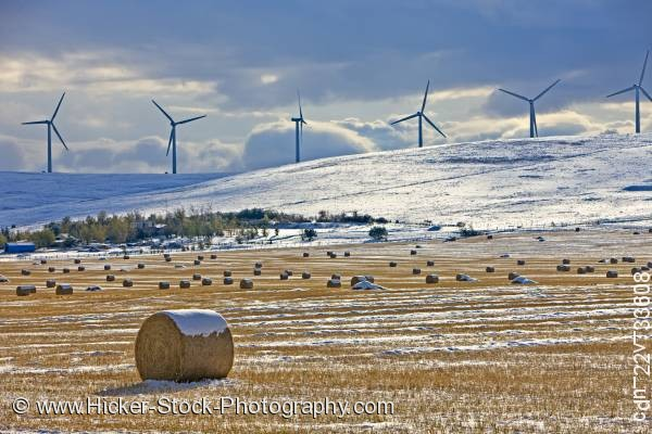 Stock photo of Hay bales snow covered windmills Southern Alberta Canada