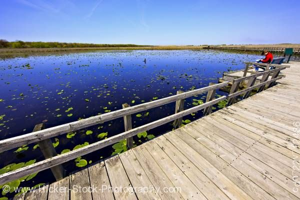 Stock photo of Marsh Boardwalk Point Pelee National Park Leamington Ontario Canada