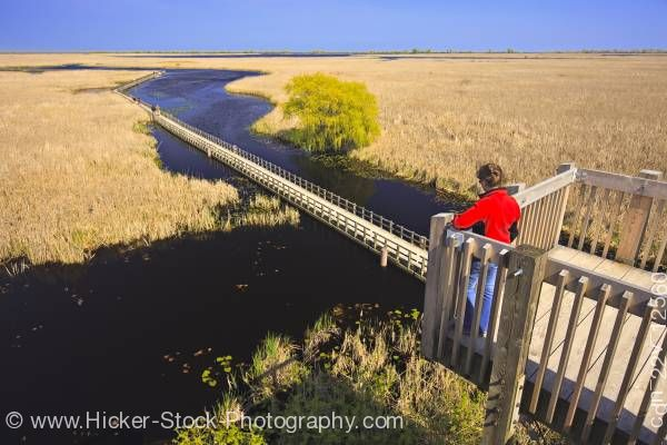 Stock photo of Tower view Marsh Boardwalk in Point Pelee National Park, Lake Erie Leamington Ontario Canada