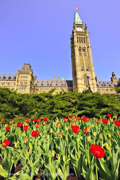 Stock photo of Peace Tower Tulip Garden Blue Sky Parliament Hill City of Ottawa