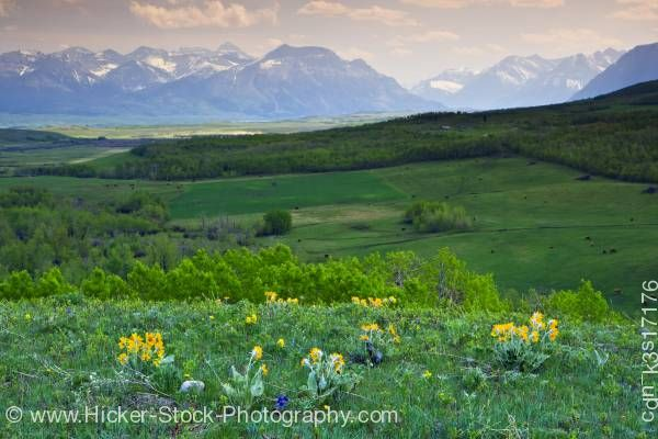 Stock photo of Prairies Waterton Lakes National Park Mountain Range Southern Alberta