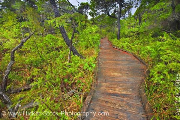 Stock photo of Boardwalk Shorepine Bog Trail Pacific Rim National Park Vancouver Island British Columbia Canada