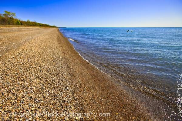 Stock photo of Shores Lake Erie Point Pelee National Park Leamington Ontario Canada