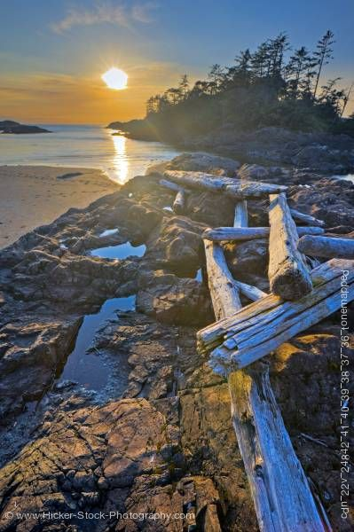 Stock photo of Sunset South Beach Driftwood Pacific Rim National Park Vancouver Island British Columbia Canada