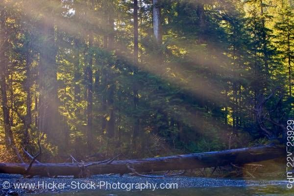 Stock photo of sun rays through trees fallen tree by Virgin Falls