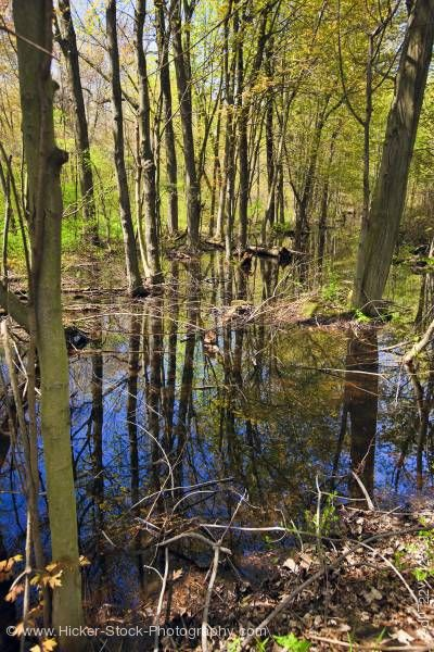 Stock photo of Swamp the Woodland Trail in Point Pelee National Park Leamington Ontario Canada