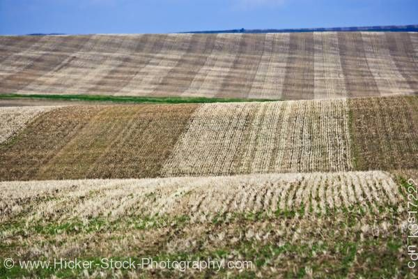 Stock photo of Wheat fields Hwy 5 Cardston Spring Coulee Southern Alberta Alberta Canada