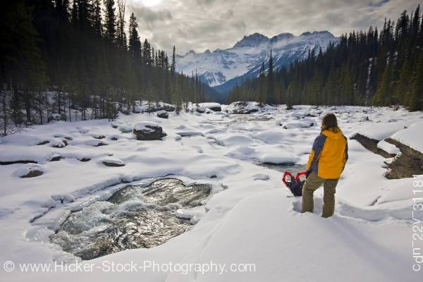 Stock photo of Woman Snowshoes Mistaya River and Mount Sarbach Mistaya Canyon Banff National Park Alberta Canada
